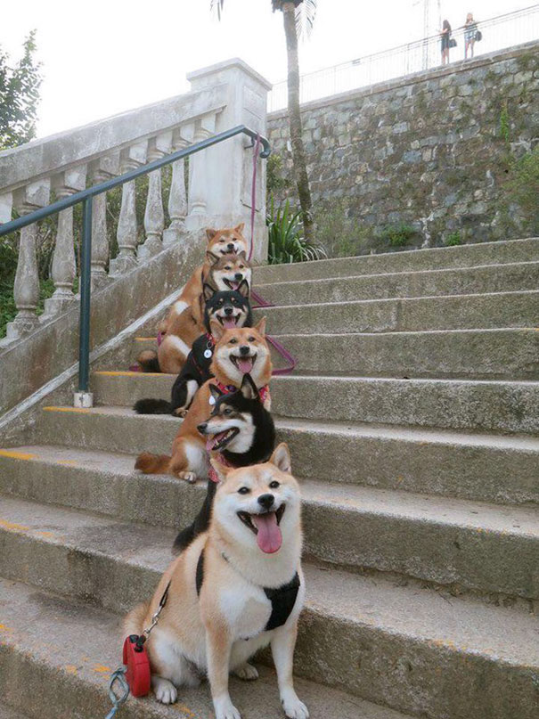 Staircase Of Puppy Smiles
