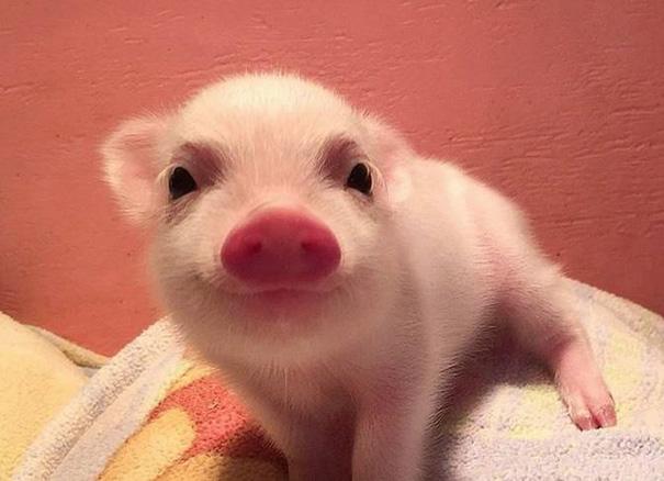 Piggy Smile