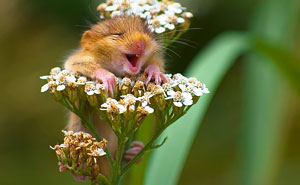 25+ Smiling Animals That Will Instantly Make You Smile