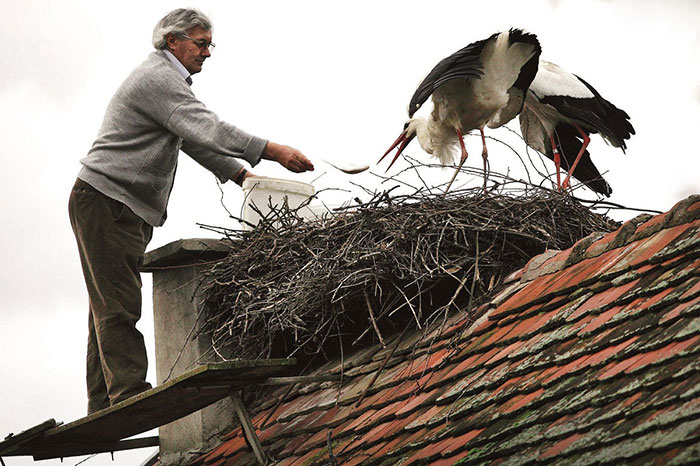 stork-flies-thousands-miles-friend-klepetan-malena-croatia-20