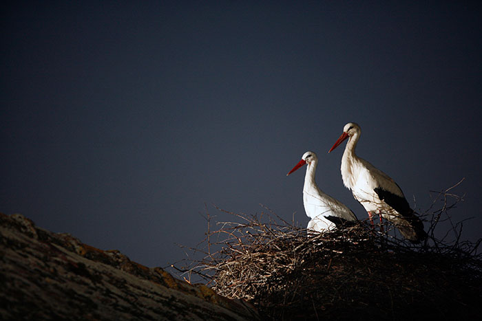 stork-flies-thousands-miles-friend-klepetan-malena-croatia-9