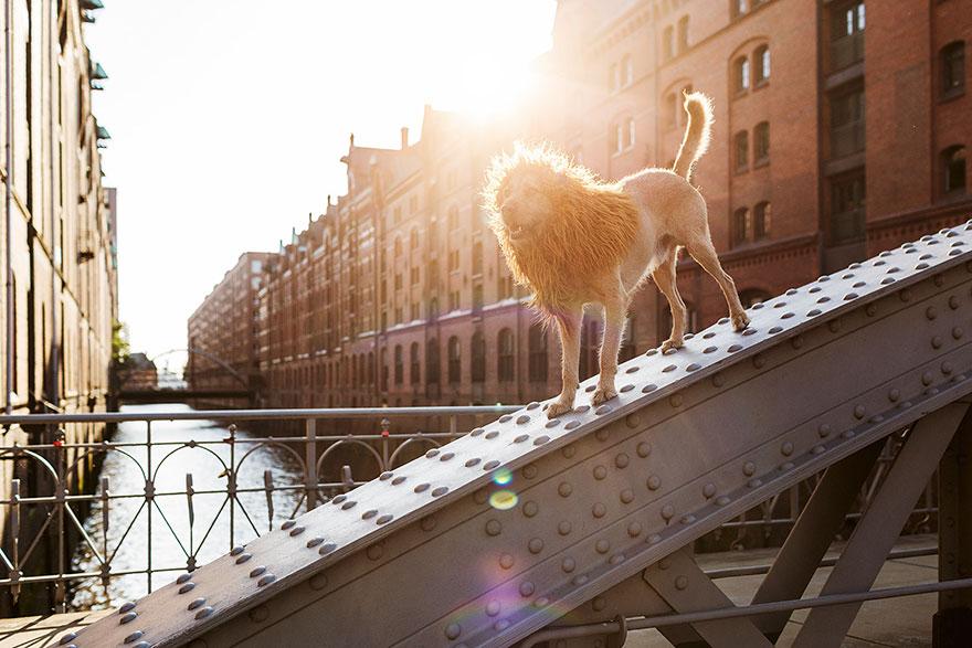 stray-dog-big-city-lion-grossstadtlowe-julia-marie-werner-12