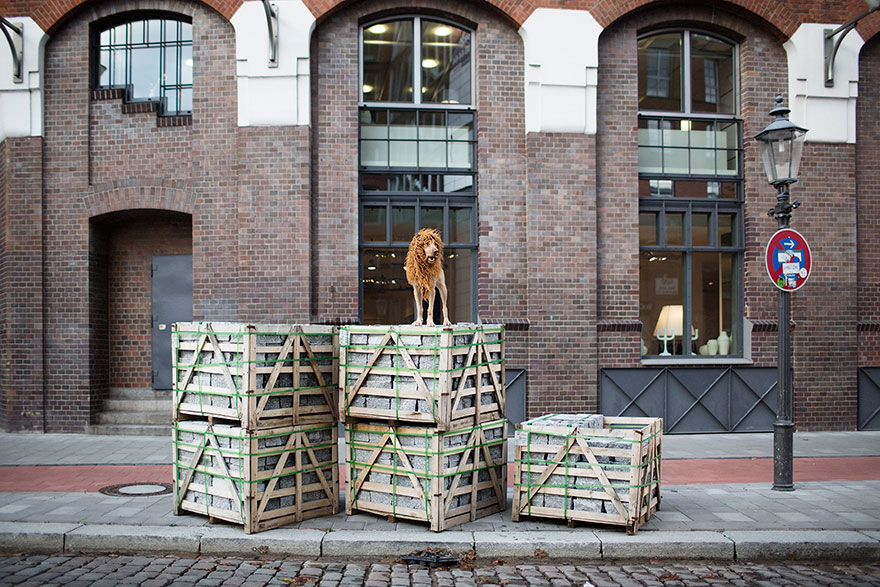 stray-dog-big-city-lion-grossstadtlowe-julia-marie-werner-5