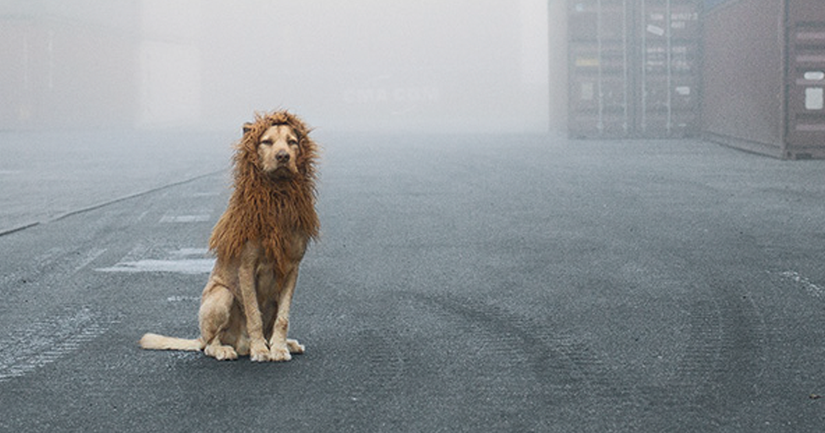 Homeless Dog Found In Garbage Becomes A Lion He Deserves To Be