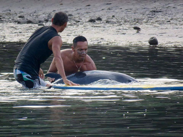 surfers-rescue-baby-whale-stranded-costa-rica-2