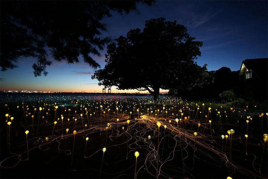surreal-light-installations-field-of-light-bruce-munro-uluru-australia-13