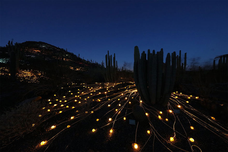 surreal-light-installations-field-of-light-bruce-munro-uluru-australia-4