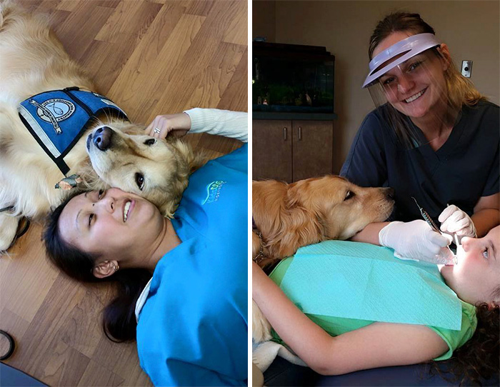 therapy-dog-dentist-stress-jojo-pediatric-dentistry-northbrook-15