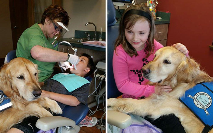 This Dentist's Office Hired Golden Retriever To Help Patients Relax