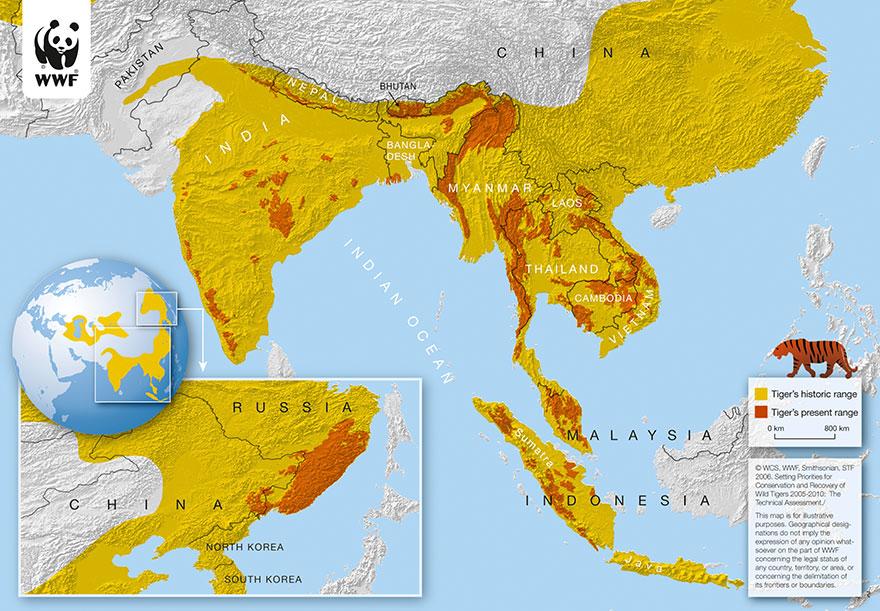 wild-tiger-population-increase-world-wildlife-fund-3