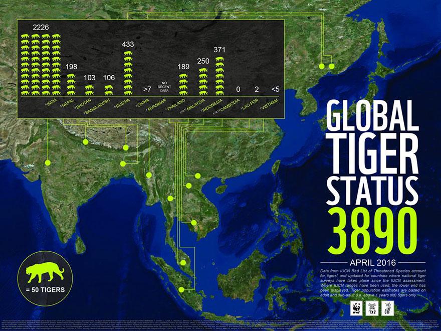 wild-tiger-population-increase-world-wildlife-fund-4