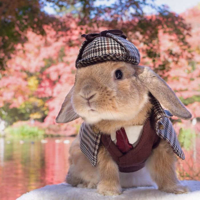 Stylish Bunny
