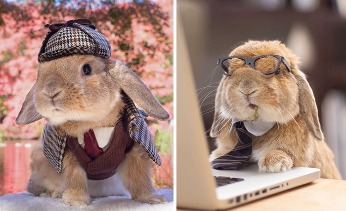 Meet PuiPui, The World's Most Stylish Bunny (34 Pics)