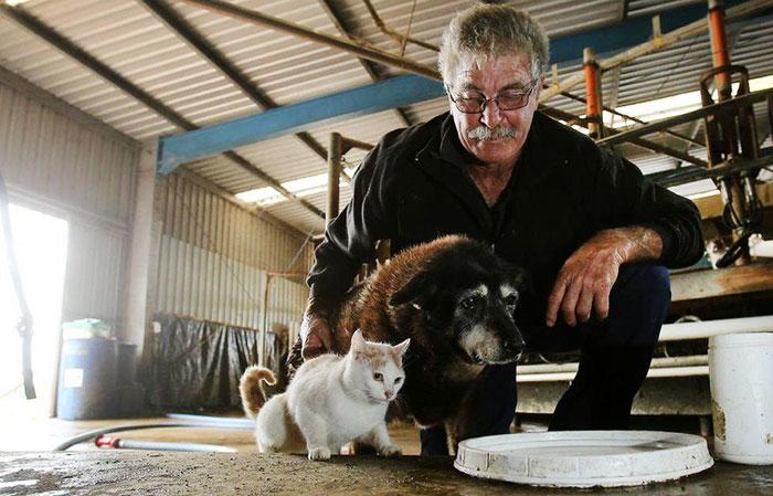 worlds-oldest-dog-dies-age-30-kelpie-maggie-7