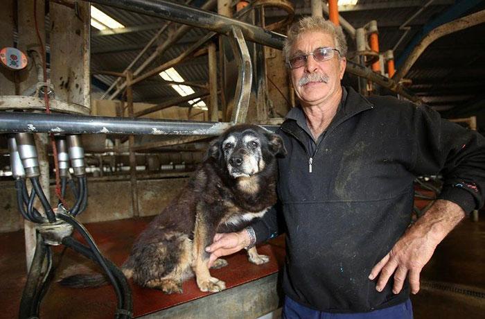 worlds-oldest-dog-dies-age-30-kelpie-maggie-9