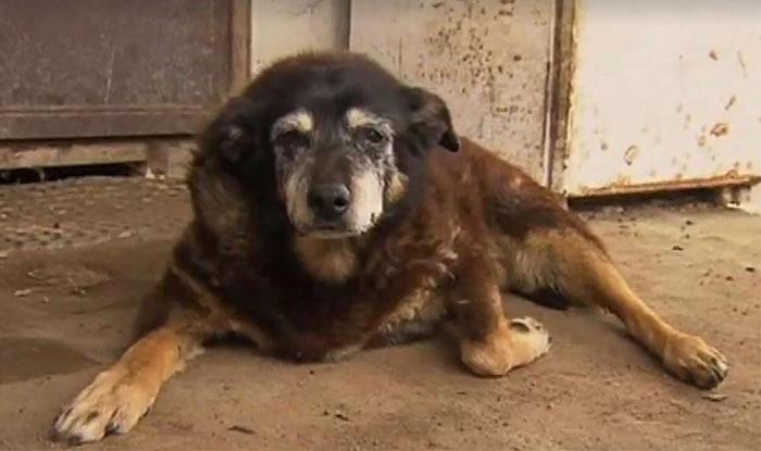 World's Oldest Dog Maggie Dies Aged 30