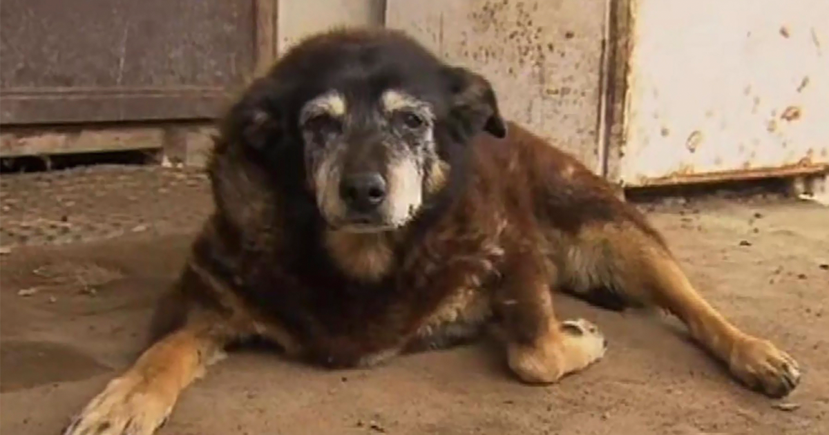 World's Oldest Dog Dies Peacefully At Age 30.