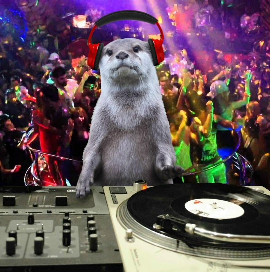 Disc Otter