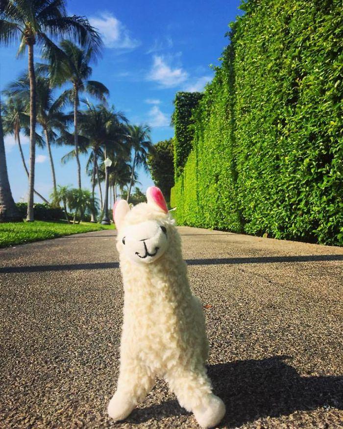 Jogging In Palm Beach