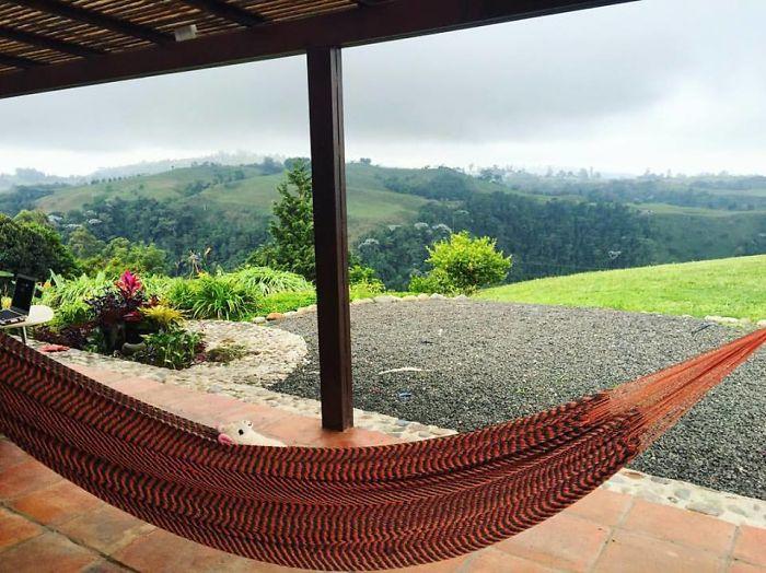 Resting In A Hammock In Filandia