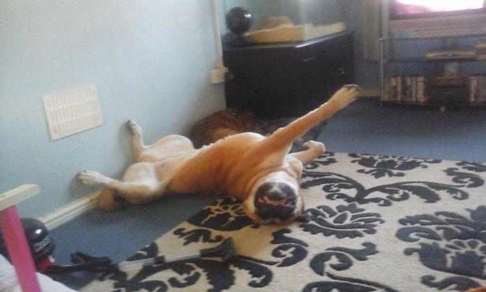Superdog!!