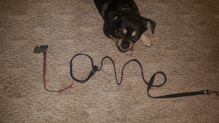My Little Boy, Buddy, And I Wanted To Share Our Favorite Word That Starts With L!