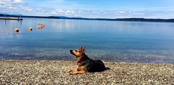 My Pup Cayote, Herron Island, Wa