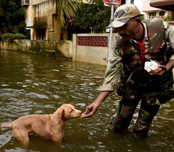 A Tamilnadu Firefighter Giving Bisucits To A Dog During Chennai Floods