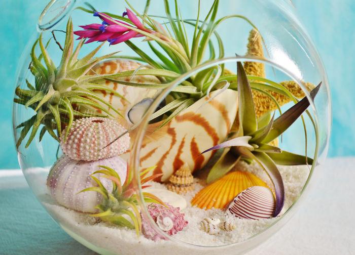Amazing Beach Terrariums Ensure A Year Round Summer