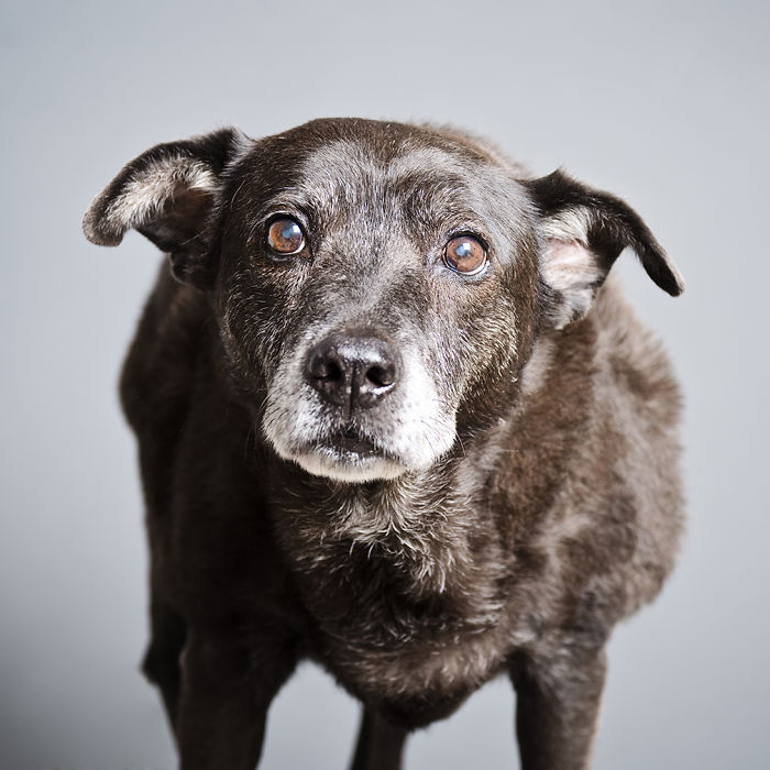 I Photograph Beautiful Old Shelter Dogs To Help Them To Get Adopted Faster
