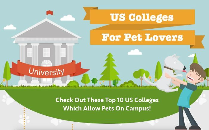 I Spent Hours Choosing The College That Will Allow Taking My Pet With Me
