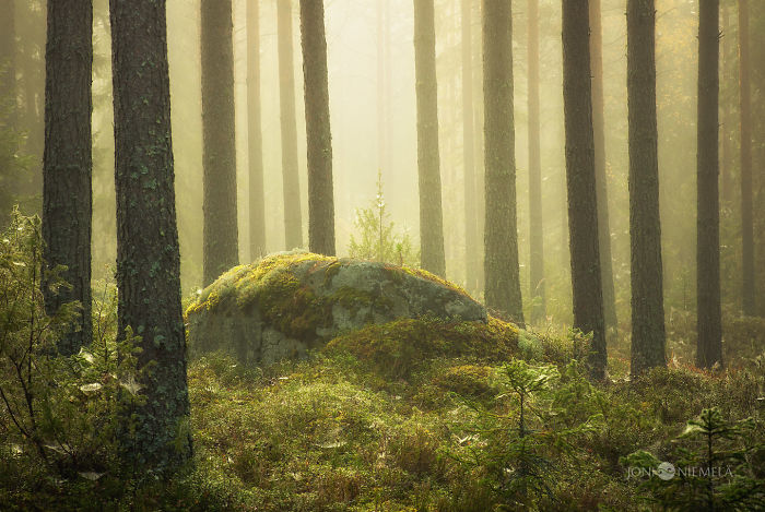 Finnish Forests