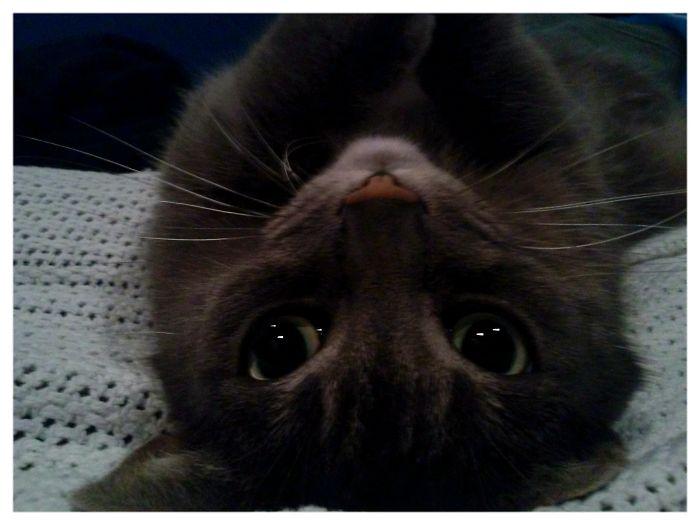 Kitty Selfie! Smokey Love's The Camera, Always Ready To Pose.