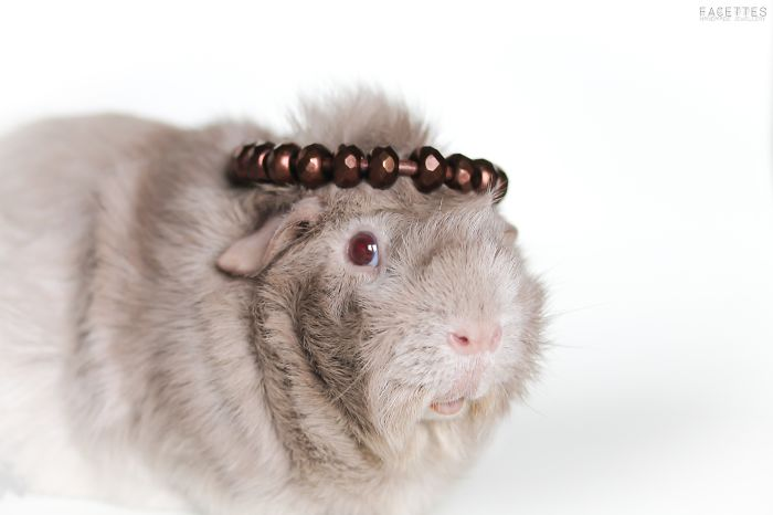 I Use My Guinea Pigs As Models For My Jewellery Project