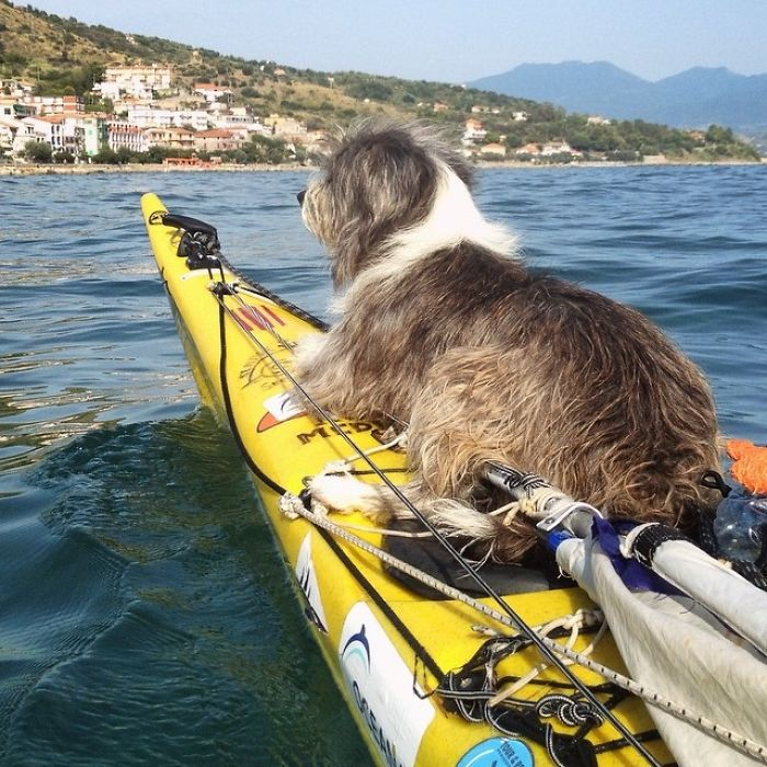 Kayaking Along Mediterranean Sea With Found Dog Sergi Basoli on Latest Writing In Spanish
