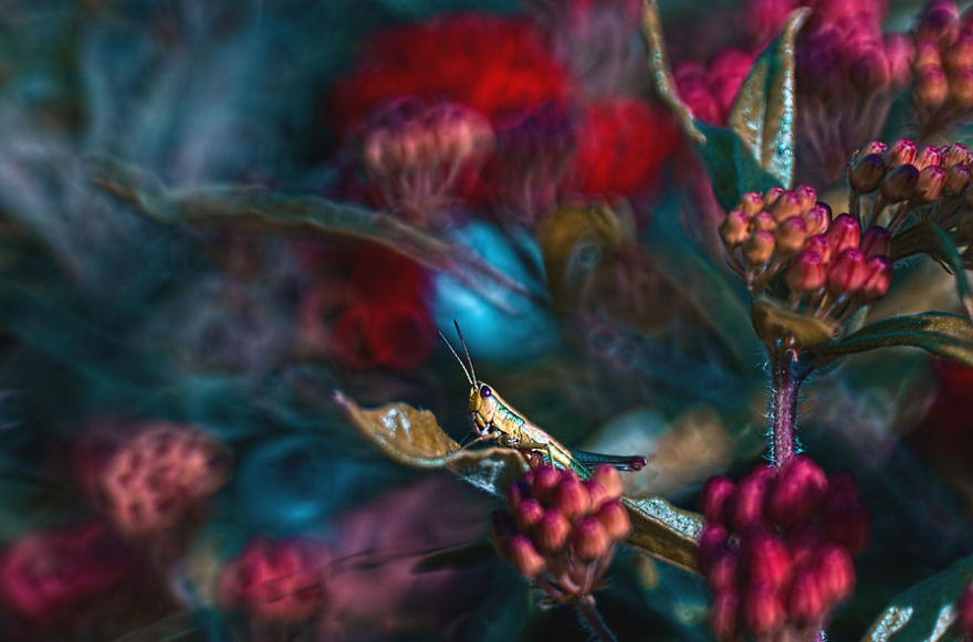 Fairytale Macro World by Polish Photographer Magda Wasiczek