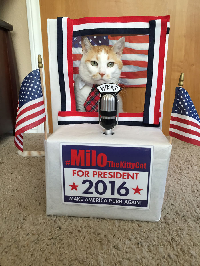 Please Vote ‪‎Milo The Kitty Cat‬ For President In 2016!
