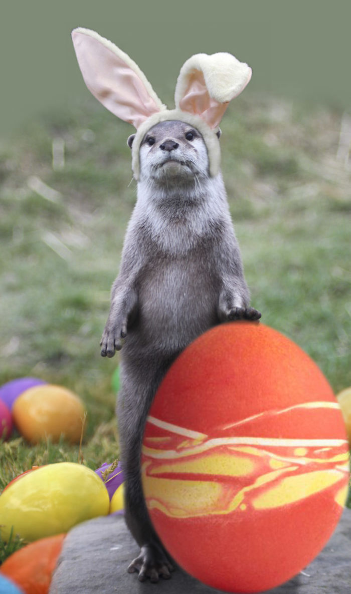 The Otter Bunny