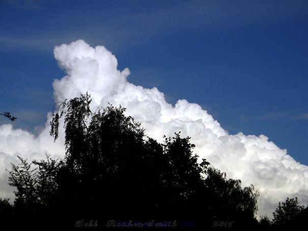 Picture-837-1-57464f4e8b6bd.jpg