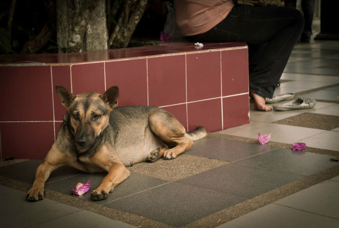 I Photographed The Homeless Dogs Of Thailand