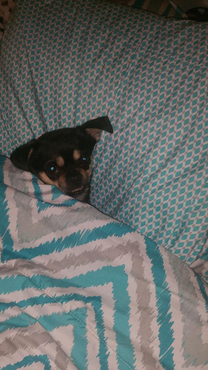 My Little Boy, Buddy, Trying To Sleep!