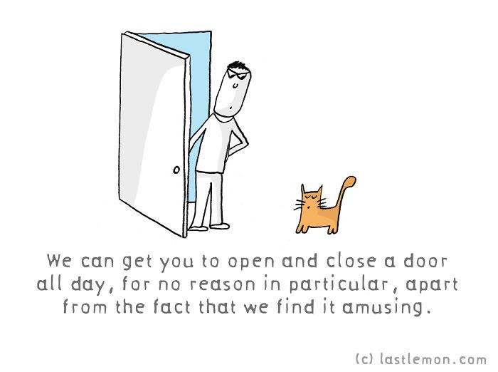 Cats Better Than Humans