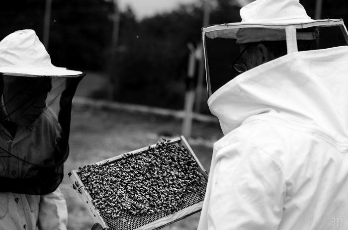 A Glimpse Into The Magical World Of Bees… In Greece!