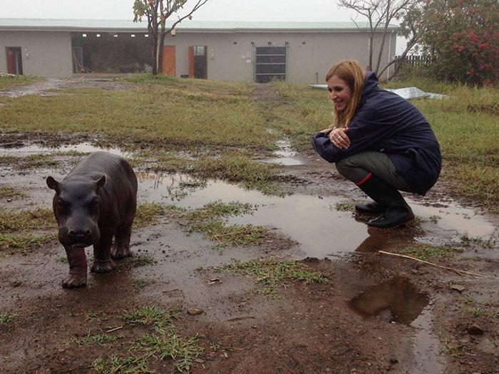 abandoned-hippo-baby-charlie-thula-rhino-orphanage-7