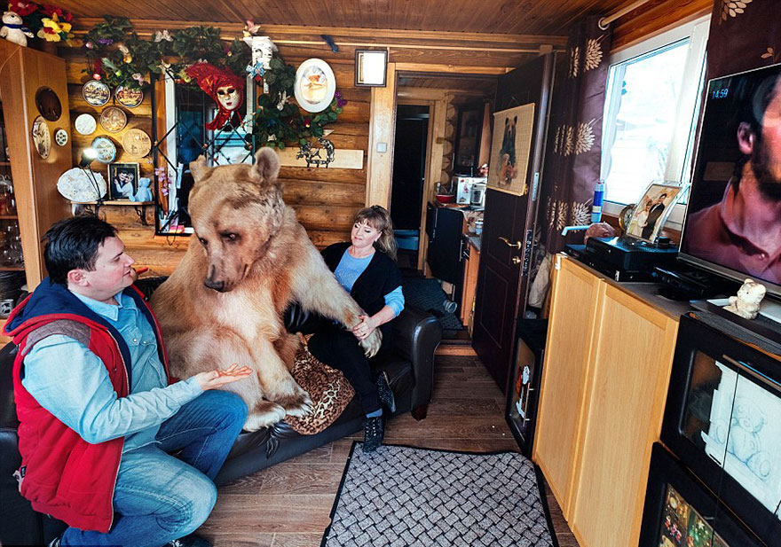 adopted-bear-russian-family-stepan-a1