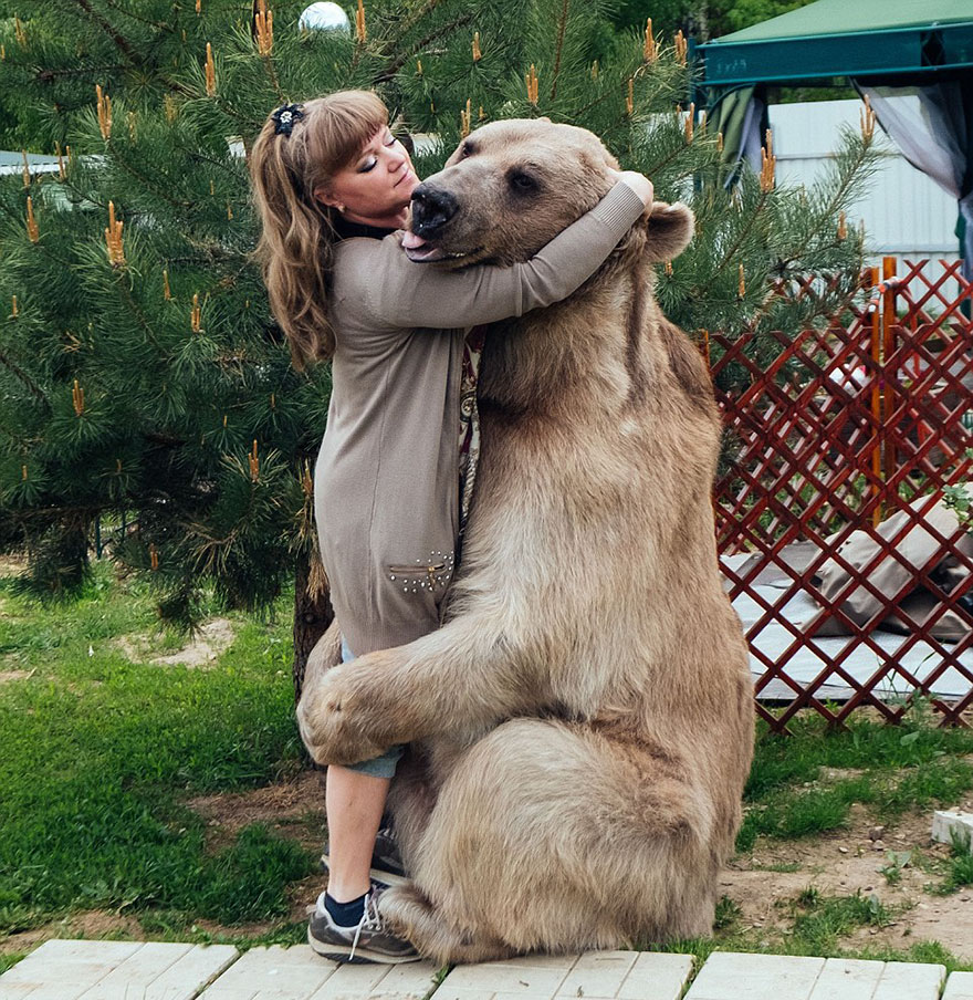 Bear Osos Videos Porno russian couple adopted an orphaned bear 23 years ago, and