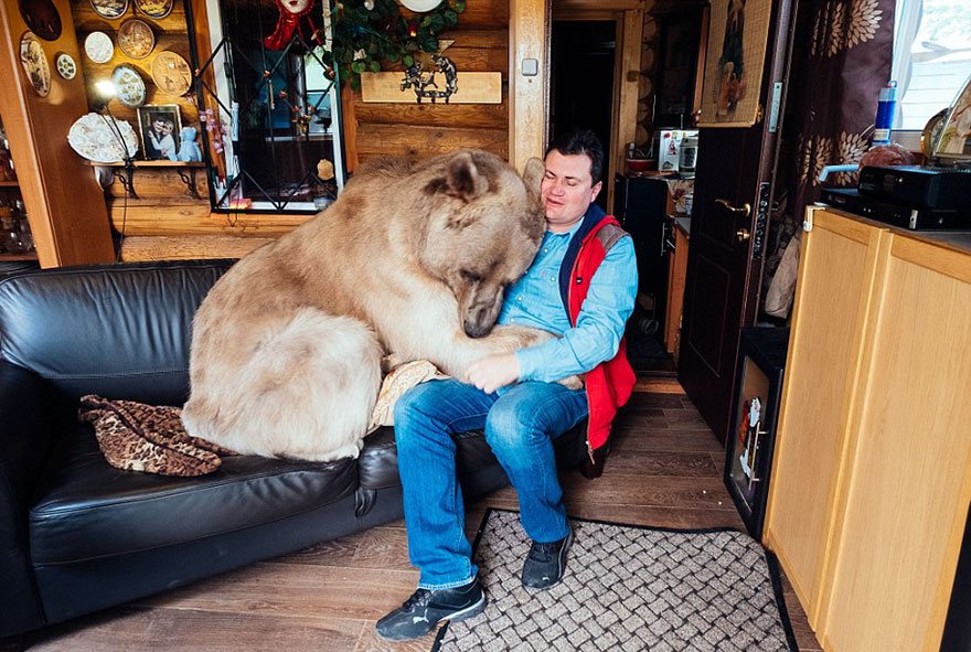 adopted-bear-russian-family-stepan-a15