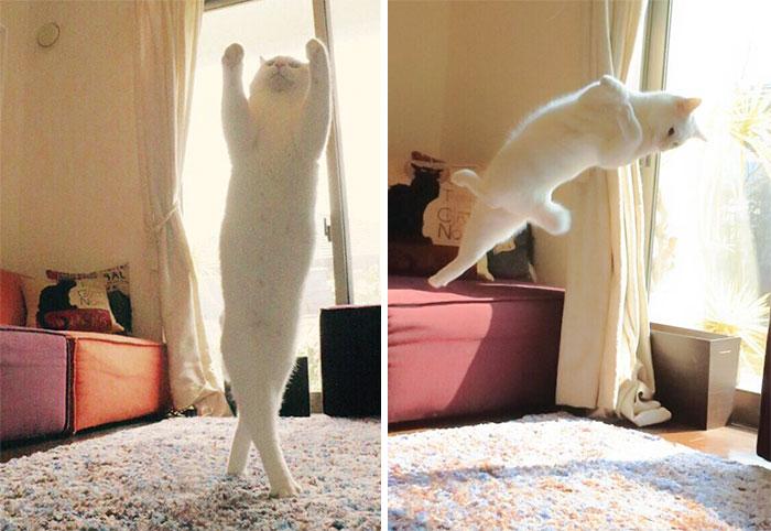 Ballet Cat Dances Like Nobody's Watching