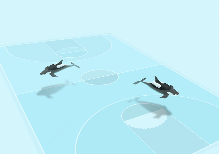 Water Inhabitants In Sport Environments