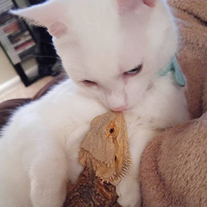 Dragon And Cat Become Two Unlikely Best Friends